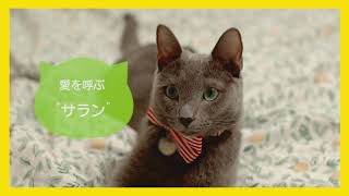 『私と猫のサランヘヨ』予告