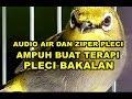 Ampuh  Suara Pancingan Air Ziper Pleci Pas Buat Terapi Pleci Bakalan  Mp3 - Mp4 Download