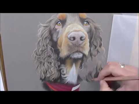 Coloured Pencil Time-lapse   Drawing a Dog   Spaniel
