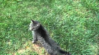 Bella the Blind & Deaf Cat Loves the Outdoors.