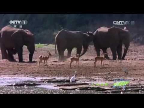CCTV1-自然故事:鳄鱼最后的晚宴(上)