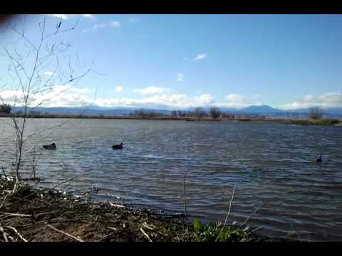 Sacramento refuge pond 40a