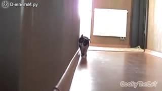 Кот из-за Угла очень страшно!