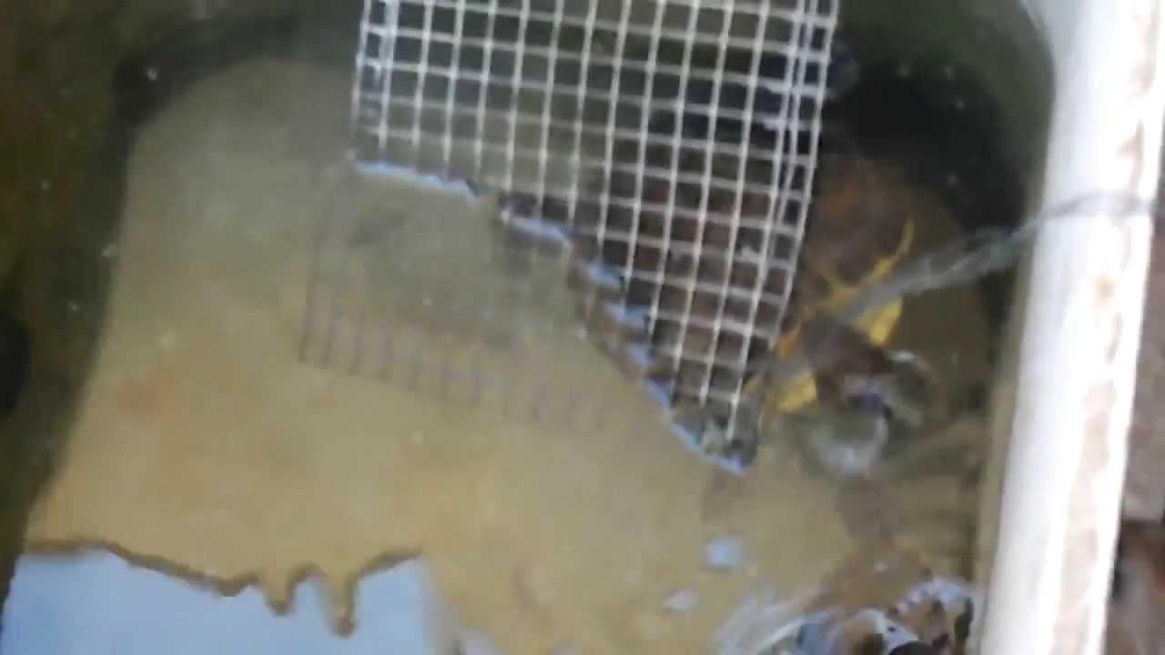 Il miglior acquaterrario per tartarughe youtube for Miglior filtro esterno per tartarughe