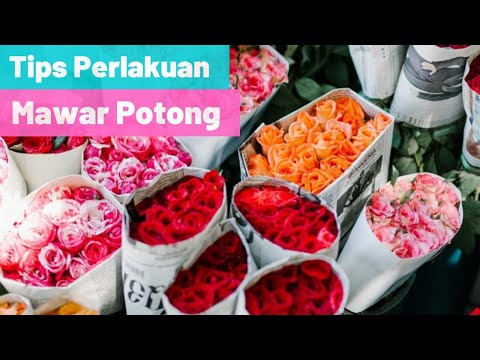 Tips Perlakuan Bunga Mawar Potong Yang Anda Terima
