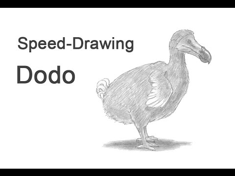 Dodo Time-lapse (Speed) Drawing