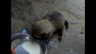 农村小伙在山上捡到一只刚出生被抛弃的小狗,用奶粉喂养精心呵护