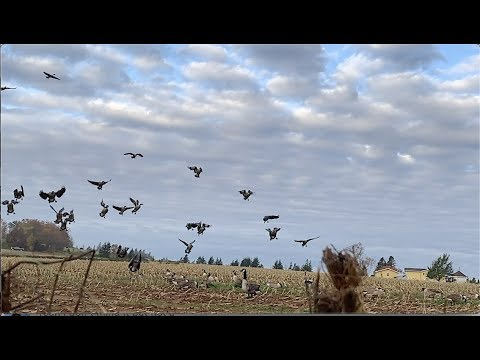 Prince Edward Island Thanksgiving Day In Canada Goose Hunting October 14th 2019