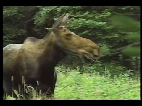 Cape Breton Highlands Park Cabot Trail (2)