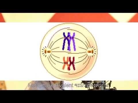 เพลงชีววิทยา เรื่องไมโอซิส DMSU407 #19