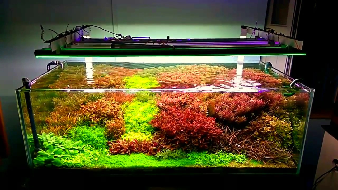 Nature aquascapes by Aquasphere - YouTube