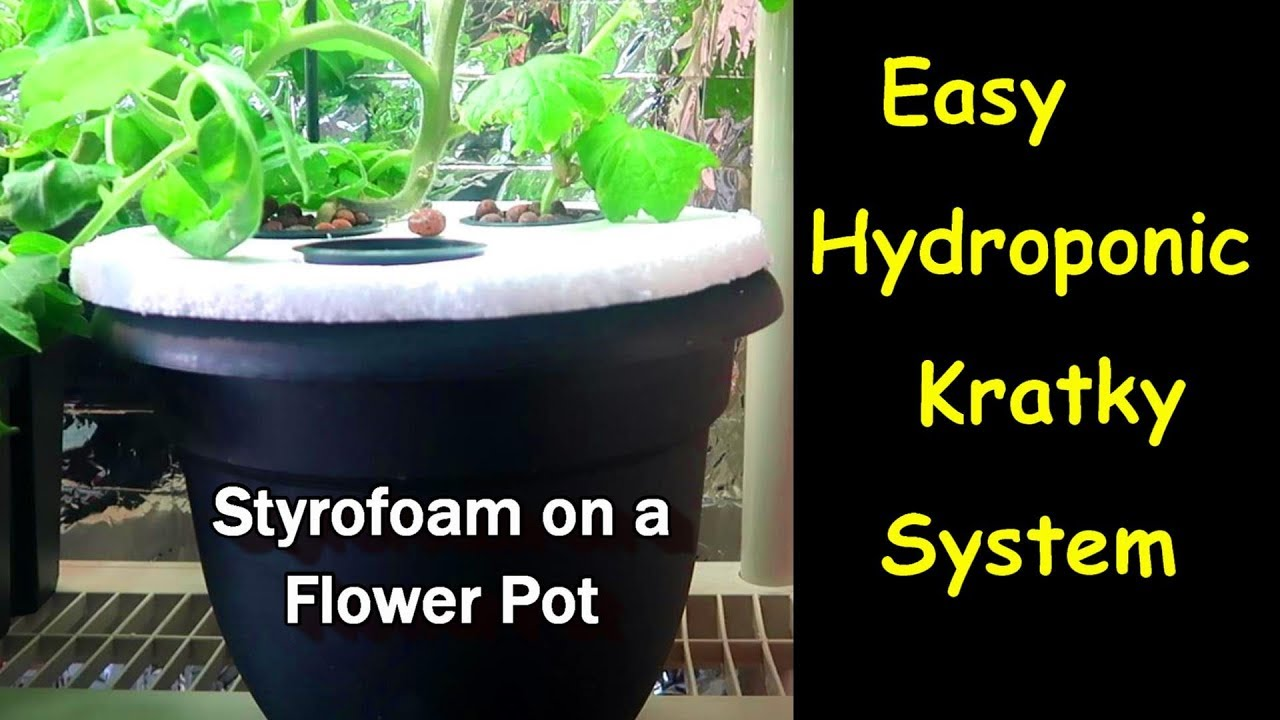 Easy Hydroponic Kratky System using just Styrofoam and a Flower Pot