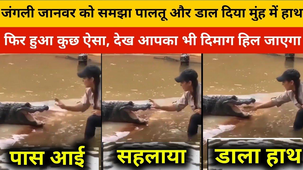 जंगली मगरमच्छ को समझा पालतू , लड़की ने डाल दिया मुँह में हाथ, फिर जो हुआ    Video Viral