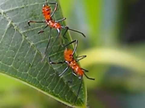 creepy orange bugs youtube. Black Bedroom Furniture Sets. Home Design Ideas