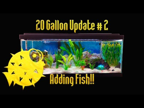 20 Gallon tank update Adding fish!!  (episode 2)