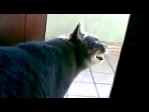 Cani e gatti che parlano in veneto youtube for Youtube cani e gatti