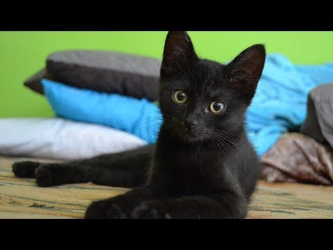 How to Identify Cats - Identifying Specific Breed Types