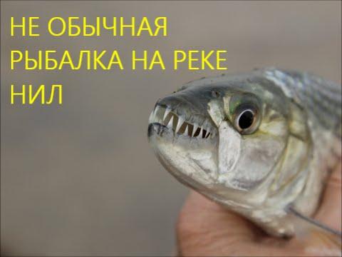 ловля рыбы держи ниле