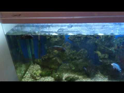 Why Fish Get Stunted!