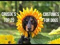 Crusoe's 20 Best HOMEMADE Dog Costumes