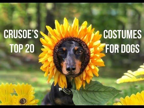 Crusoe's 20 Best HOMEMADE Dog Costumes