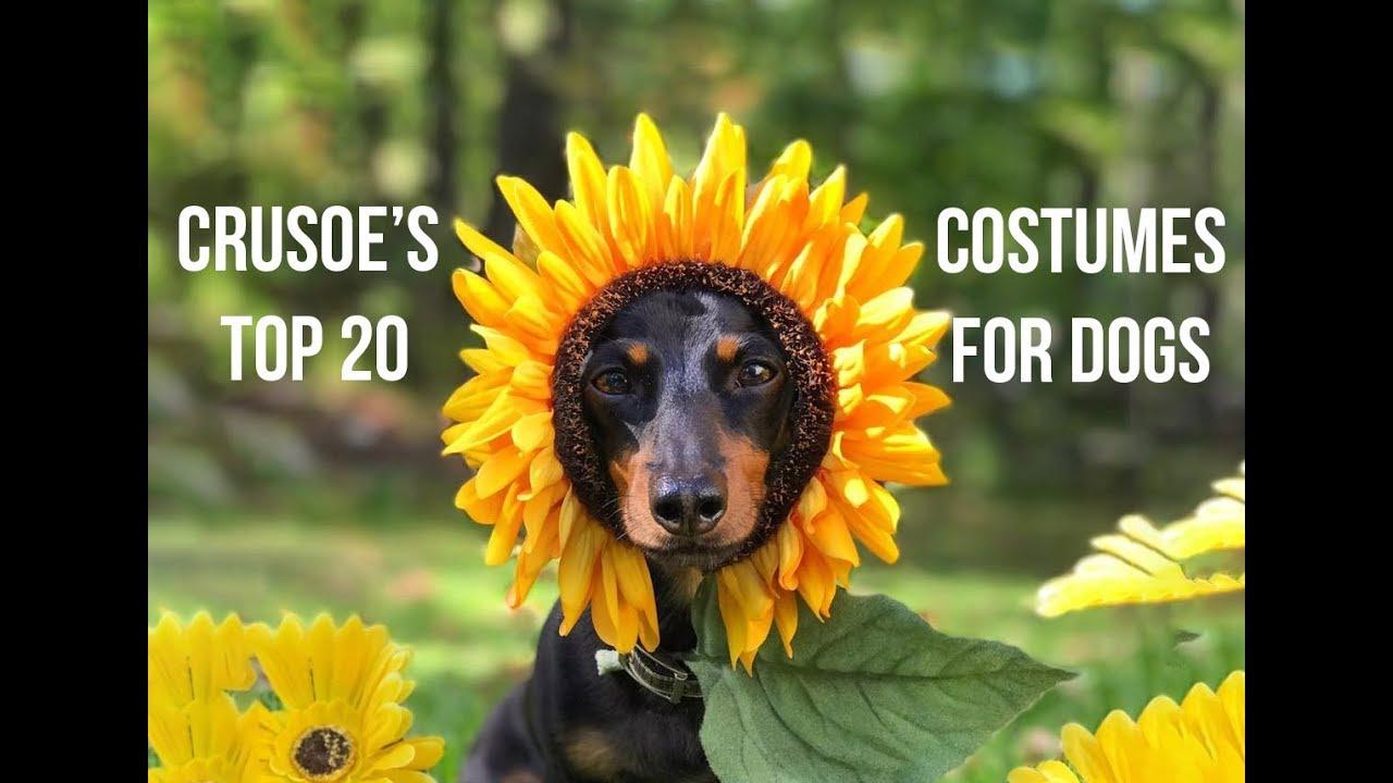 Crusoe's 20 Best HOMEMADE Dog Costumes - YouTube