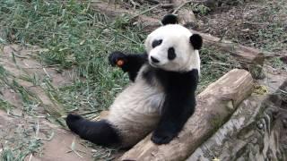 yingying816:Merry X'mas Fu Long, Wu Jie, Zhen Zhen!!