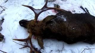 Охота на лося с гладкоствольным ружьем видео