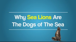 definitive proof that sea lions are just dogs that live in the sea