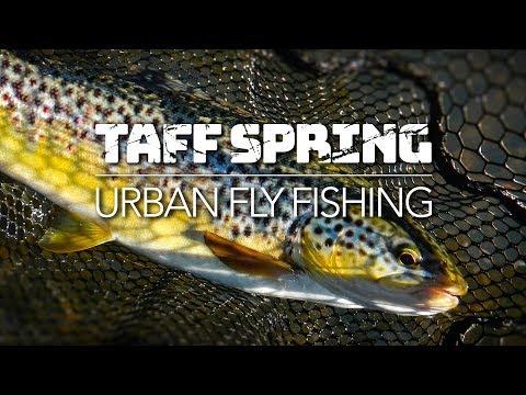 TAFF SPRING