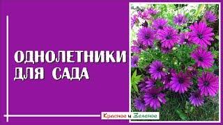 Однолетние цветы для сада. Самые эффектные и неприхотливые
