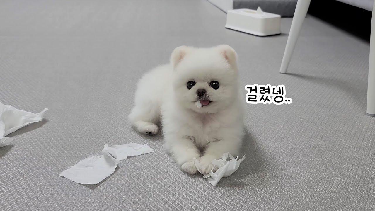 오늘은 무슨 사고를 칠까? 강아지가 조용할 땐 우선 안돼!를 외쳐야 해요