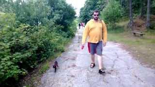 Oriental cat walk on a leash :)))