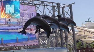 Дельфинарий ШОУ дельфинов Rixos World, The Land of Legends Theme Park, Antalya Turkey турция белек