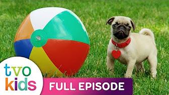 Kindergarten - Cutie Pugs - Full Episodes - YouTube