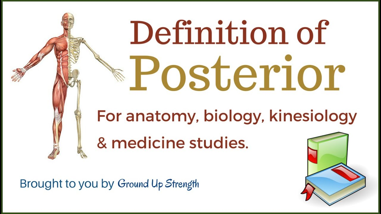 Posterior Definition (Anatomy, Kinesiology, Medicine) - YouTube
