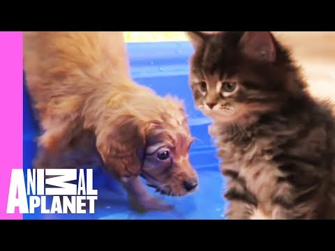 The Best Of Curious, Cuddly Kittens And Puppies! | Too Cute!