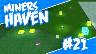 Miners Haven #21 - SO MANY CRATES (Roblox Miners Haven)
