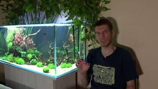 Покупка первого аквариума. Основные нюансы