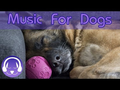 NEW Dog Music for Anxious Puppies and Dogs! Long Playlist of Music, How to Calm Your Stressed Dog!