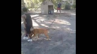 People getting chase by dogs