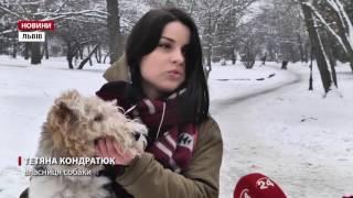 видео Як спровокувати блювоту у собаки