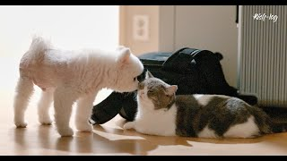 #Dog's responsibility to take care of a #cat (petlog 42)
