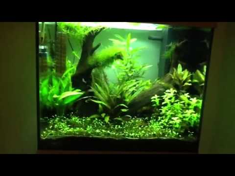 aquarium juwel lido 120 youtube. Black Bedroom Furniture Sets. Home Design Ideas