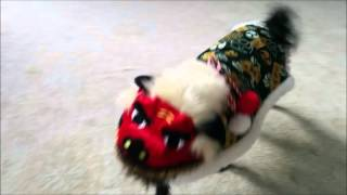 Chinese Lion Dogs