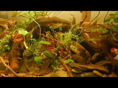 Aqua News №92. Ракообразные и рыбы в травнике , совместимость.
