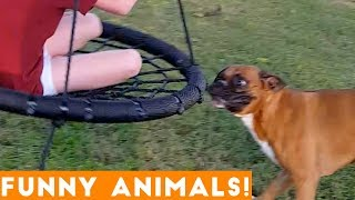 Cute Animal Compilation