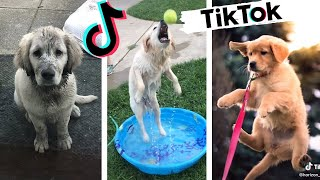Funny Dogs of TIK TOK Compilation ~ Try Not to Laugh ~ Cute Puppies TikTok
