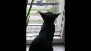 Кот, окно и голубь