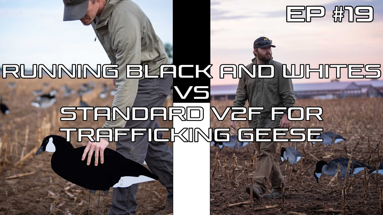 Download Do Flocked Decoys Really Make a Difference?- Ep #19 Field Facts with Forrest